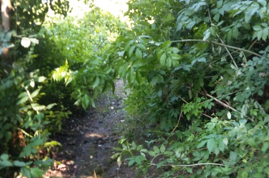 sentiero2
